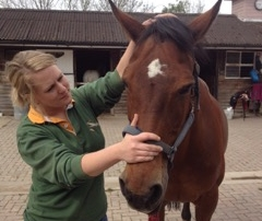 Equine Osteopathy Tunbridge Wells