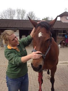 Equine Osteopathy Tunbridge Wells